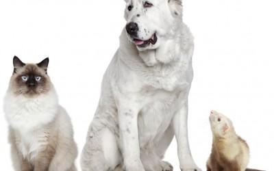 Certificat de mise en conformité d'un chien, chat ou d'un furet importé sur le territoire du Grand-Duché de Luxembourg et qui ne respecte pas les dispositions des Règlements (UE) 576/ 2013 et 577/ 2013